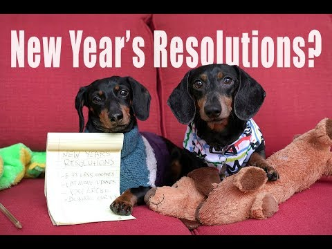 Cute Dachshunds Write New Year's Resolutions - Cute Dog Video