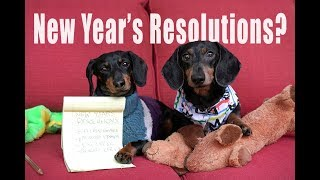 cute-dachshunds-write-new-year-s-resolutions-cute-dog-video