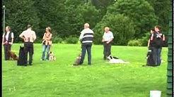 Training auf dem Hundeplatz Balve