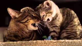 Правильное, здоровое питание кошек и отличное настроение.