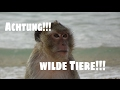 Cat Ba-  Teil 2  Affenangriff auf Monkey Island #13