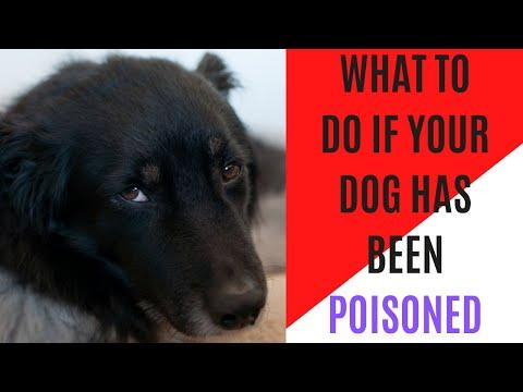 Dog Poison: Has My Dog Eaten Poison?