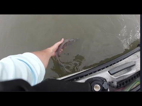 Fishing Bayou Vista - Marsh And Docks