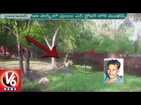 Drunk Man Jumps Into Lions Enclosure At Hyderabad Zoo Park | Officials Rescue | V6 News