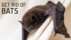 How To Get Rid Of Bats Home Remedies