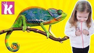 Необычный зоопарк с насекомыми и растениями Развлечение для детей Entertainment for children zoo