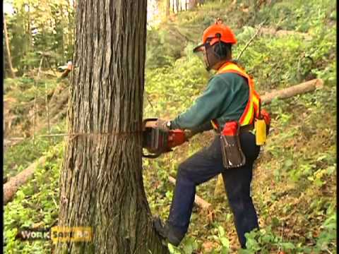 BC Faller Training Standard - Falling Hazards (13 of 17)