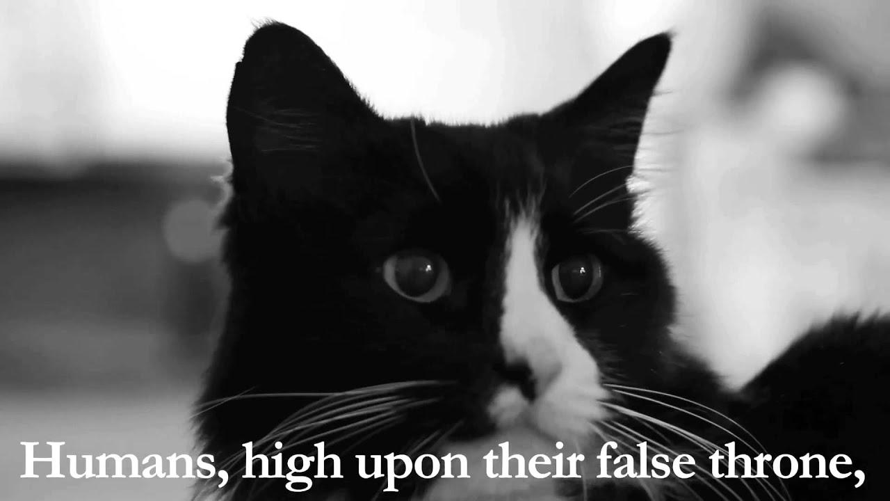 Henri The Cat Part