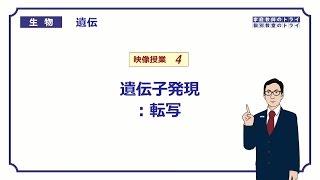 【高校生物】 遺伝4 遺伝子発現:転写(17分)