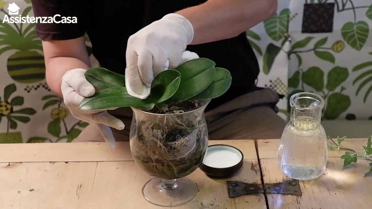 Download Come prendersi cura delle orchidee - I tutorial di Assistenza Casa