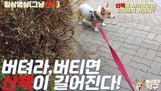 대전 송강동 송강그린APT 옆 도로 산책길   웰시코기…