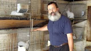Urban Survival Livestock: Raising Rabbits Part 1