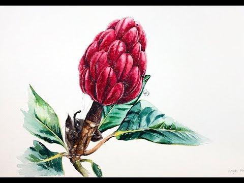 Magnolia Fruit in Watercolors Painting Tutorial