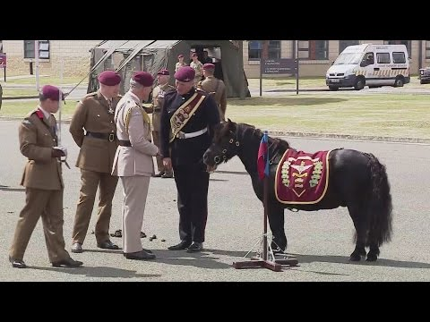 Parachutes and ponies to celebrate Charles 40 years as Colonel-in-Chief