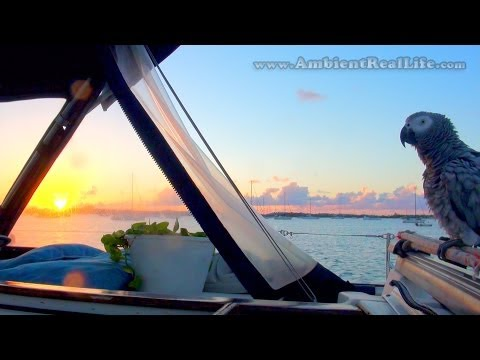 "Life with ""LUCKY"", our African Grey Parrot, Sailing around the CARIBBEAN! – Part 3"