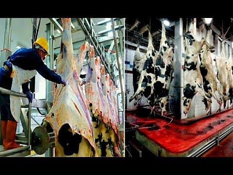 Удивительный мясоперерабатывающий завод. Мощь современных технологий.