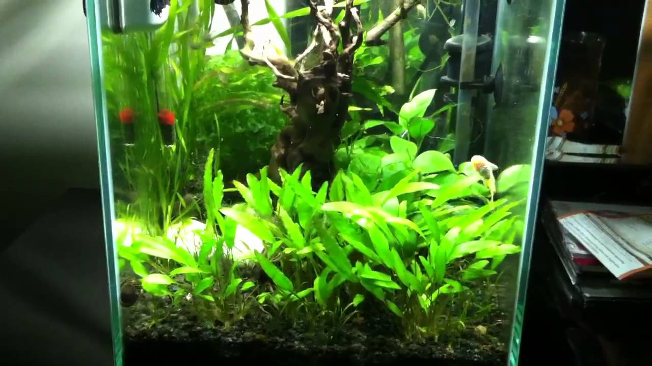 Fluval Chi Planted Tank With Eheim Lights