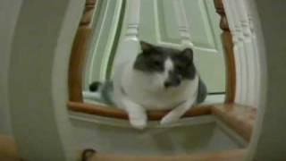Dogs and Cats Video Funny Stuff