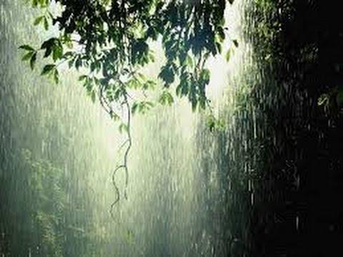 Suara Hujan - Relaksasi (Rain Sound Relaxation)