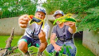 GIANT BIRD LURE Fishing Challenge!! -Winner Gets $100