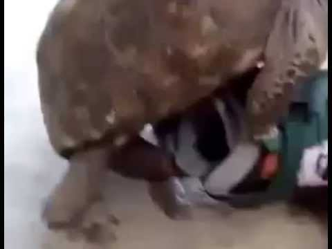 turtle breeding a rollerblade