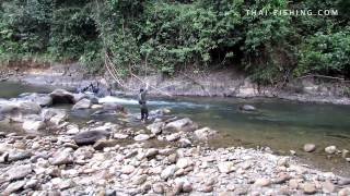 Mahseer Fly fishing - Jungle Fly Fishing Thailand