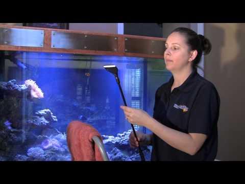 How to Clean an Aquarium / Tank like a Professional 水族館
