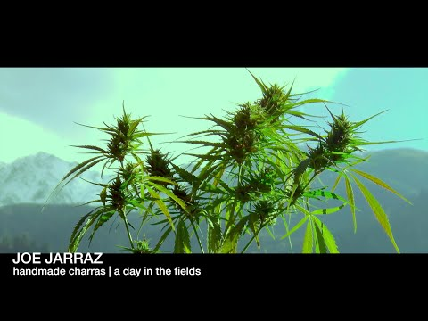 IndianCharras | a day in the fields | part 2