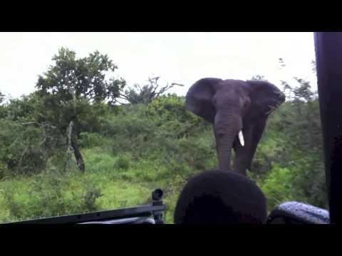 Epic Elephant Charge - Thula Thula African Adventure