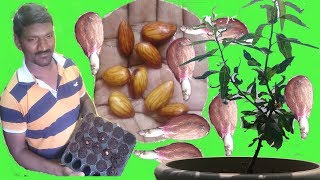 vuclip How to Grow Almond Tree From Seeds at home Easy Process DIY