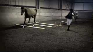 ANGLO ARAB DOING TROTTING POLES FIRST TIME May 23, 2012 21:15 Thumbnail