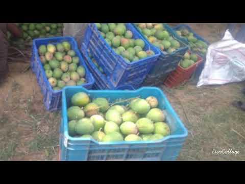 Farm land for sale near Kanakapura