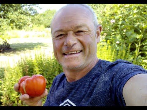 Comment entretenir et tailler vos tomates doovi - Cultiver aubergine en pot ...