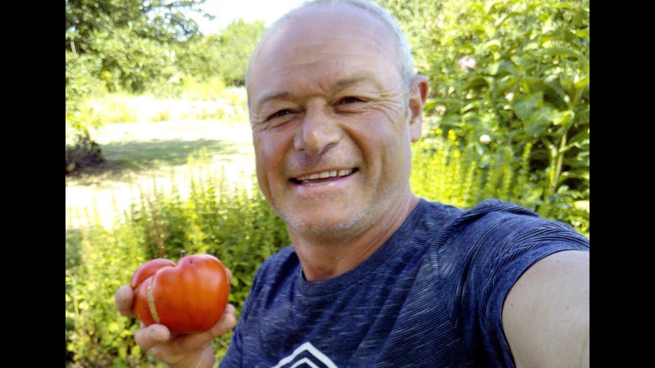 Planter Des Tomates En Pot cultiver vos tomates en pot oui c'est possible