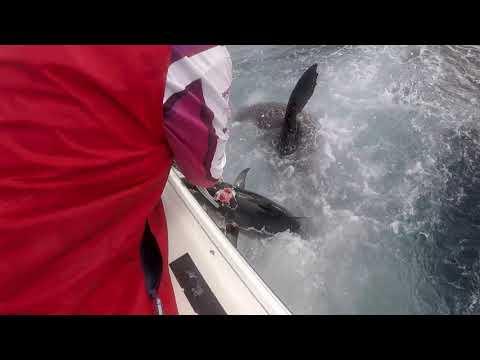 Eaglehawk Neck Fishing Tasmaniai EHN - Easter 2019