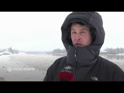 CBC NL Here & Now Tuesday January 16, 2018