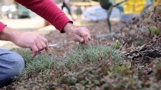 How To Prune Perennials!