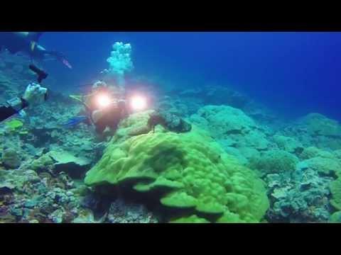 Tauchurlaub Yap Micronesien 2014 im Manta Ray Bay Hotel