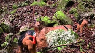 ウエルシュテリアで大鹿を狩り、見事に手中に収めた。