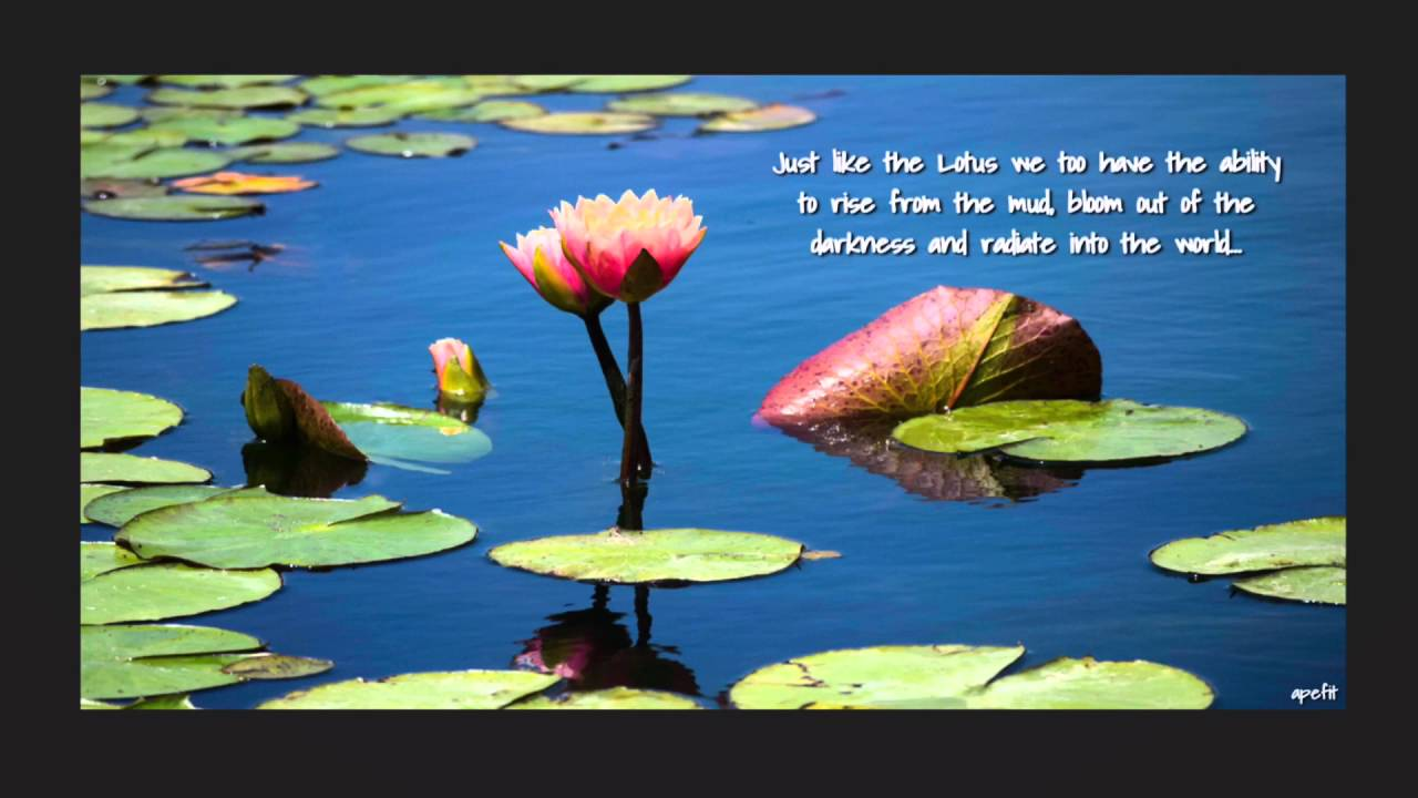 Just like the lotus we too have the ability to rise from the mud just like the lotus we too have the ability to rise from the mud bloom out of the darkness izmirmasajfo Image collections