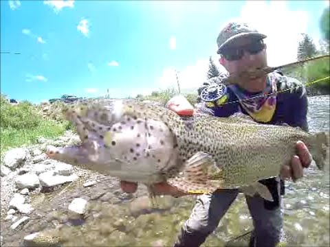 Blue River - Silverthorne, Colorado - Fly Fishing