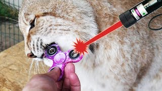 РЕАКЦИЯ РЫСЕЙ НА СПИННЕР И ЛАЗЕР / BIG Cat Plays with Fidget Spinner and LASER