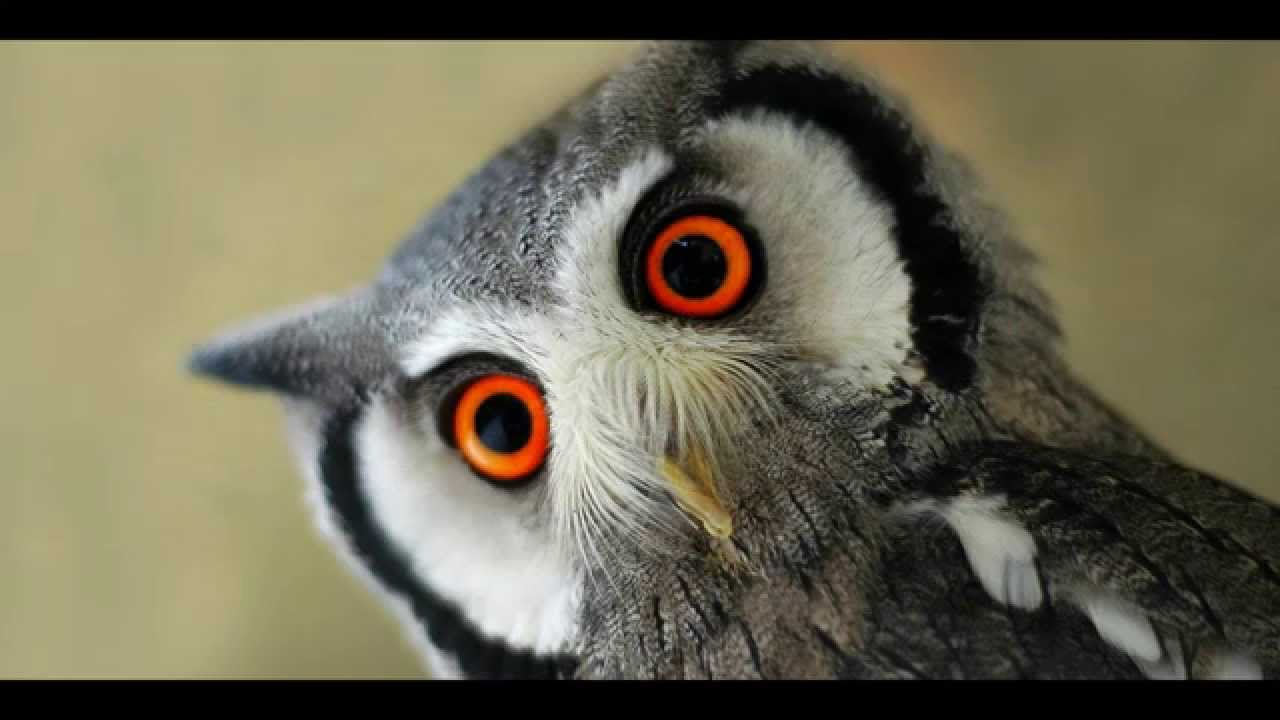 HD] Binatang Teraneh Sepanjang Masa most curious animals around ...