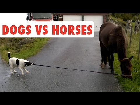 Dogs Vs Horses | Funny Pet Video Compilation 2017