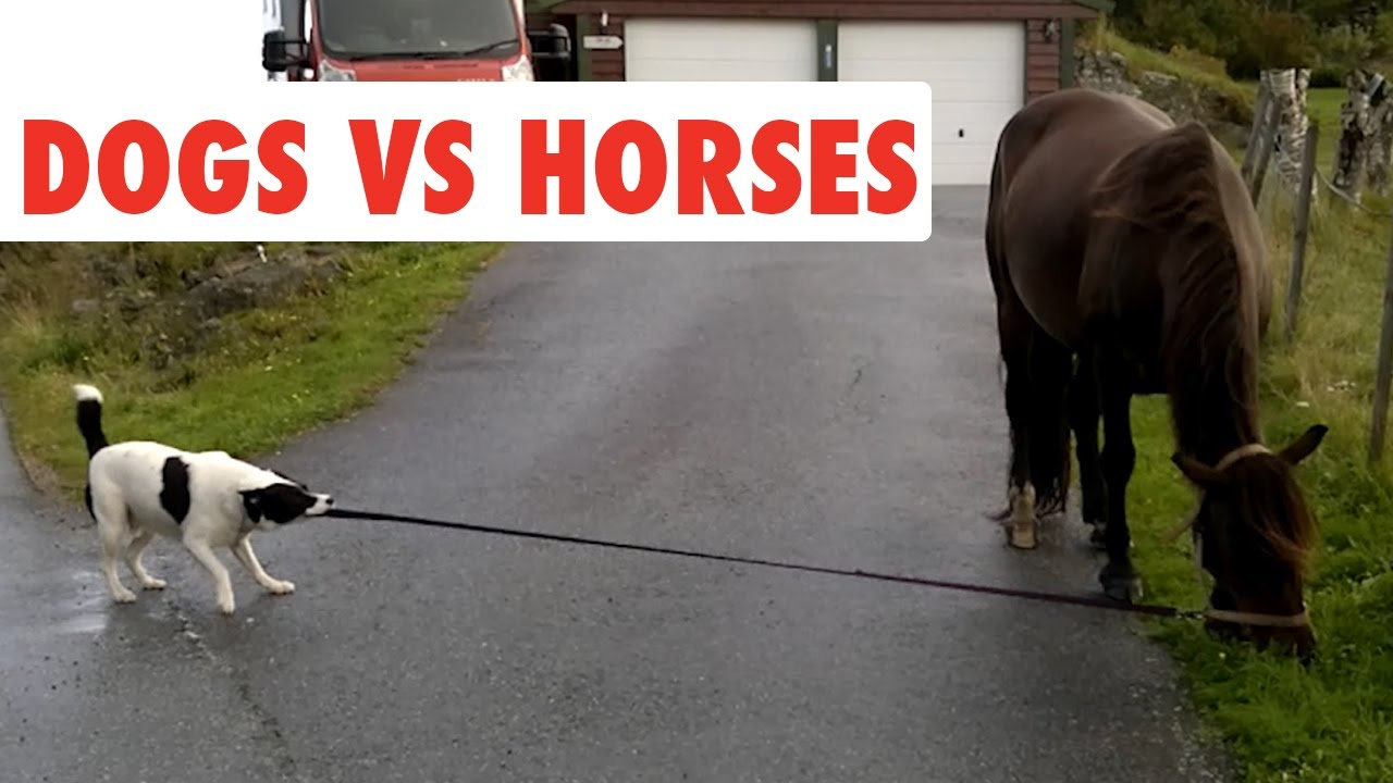 Funny People Riding Pig 🐖🐽🐷 Hilarious! Funniest Animals ... |Youtube Pets Funny Horses