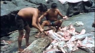 Подводная Одиссея Кусто - Золотая река 1984