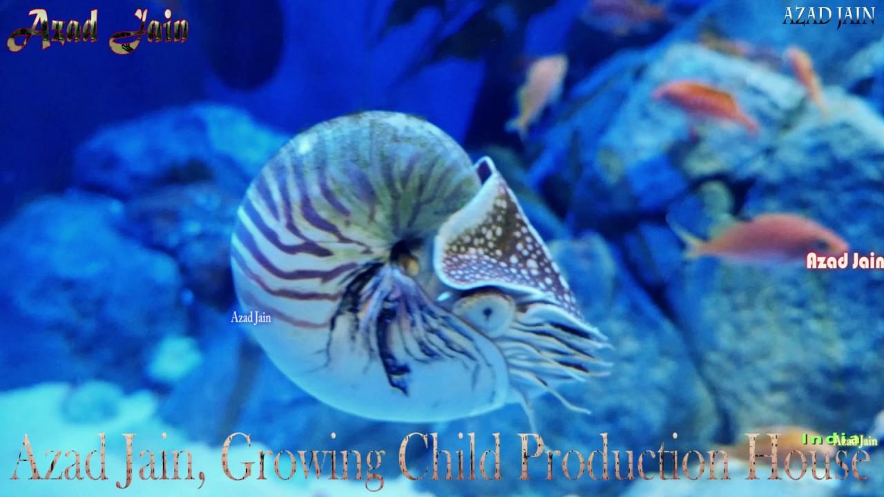 Fish aquarium in sentosa - Cherry Anthias Fish Emperor Nautilus Sunrise Perch Fish At S E A Aquarium Sentosa Singapore Video