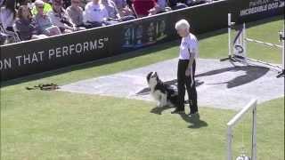 2014 Idc Eastern Regional - Large Dog Agility