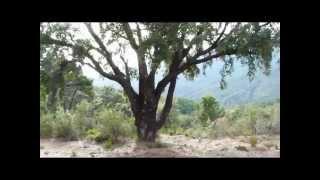 Sierra de las Nieves I.Introduccion. La Mariposa Nocturna. Salud Integral. Proyecto Shambala