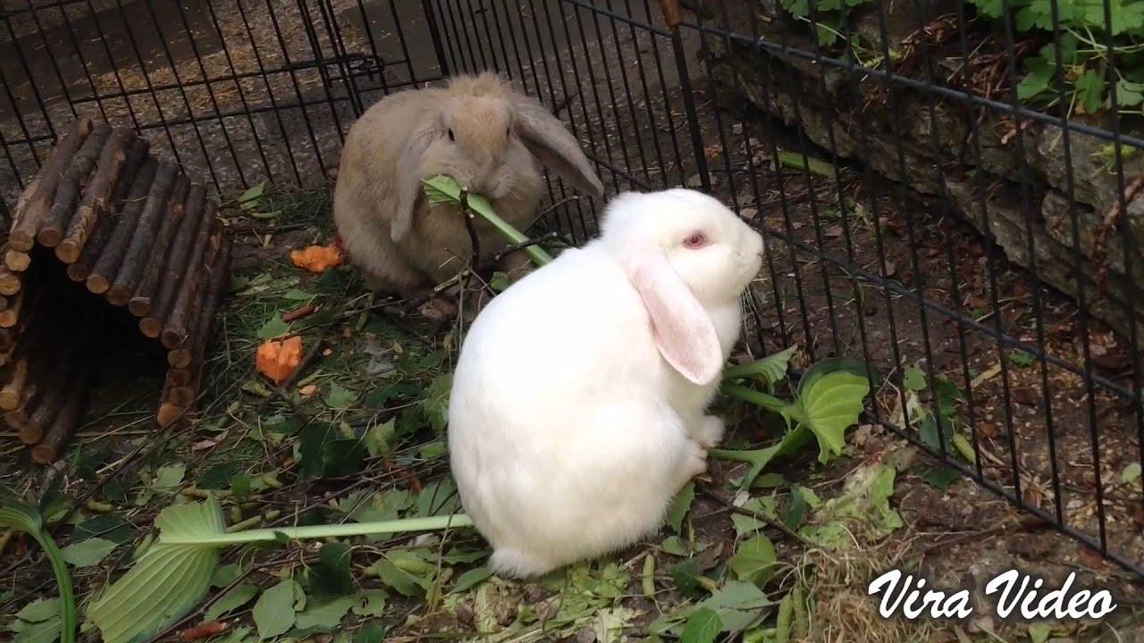 Nijntje Neele My Sweet Bunnies Eating Hosta Leaves Youtube